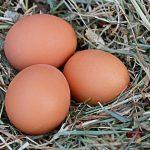 Công dụng và cách dùng trứng ngỗng cho bà bầu